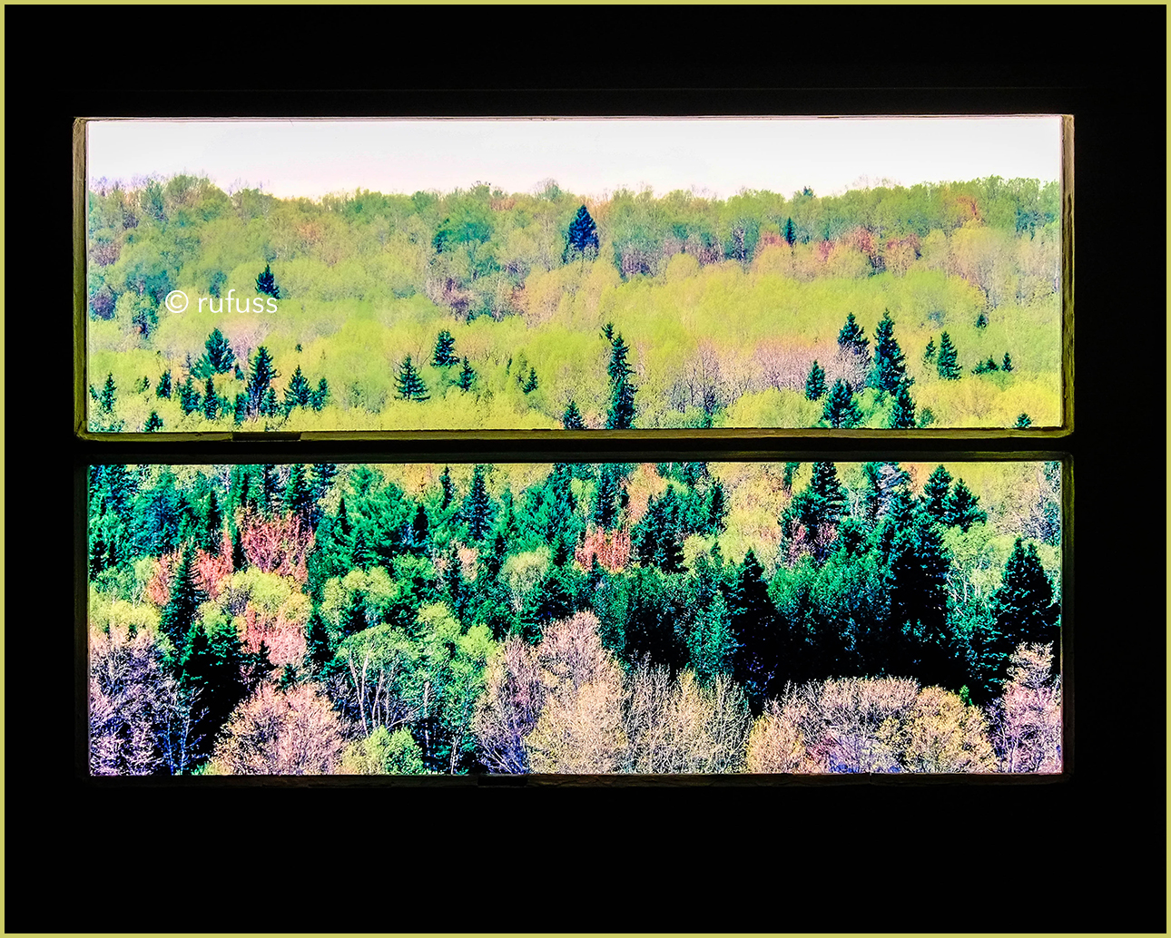 Spring Trees.  Baie-Saint_Paul, Quebec.  Window Lightbox by Rufuss.